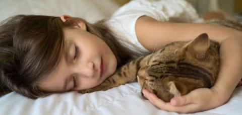 10 Health Benefits of Living with Cats